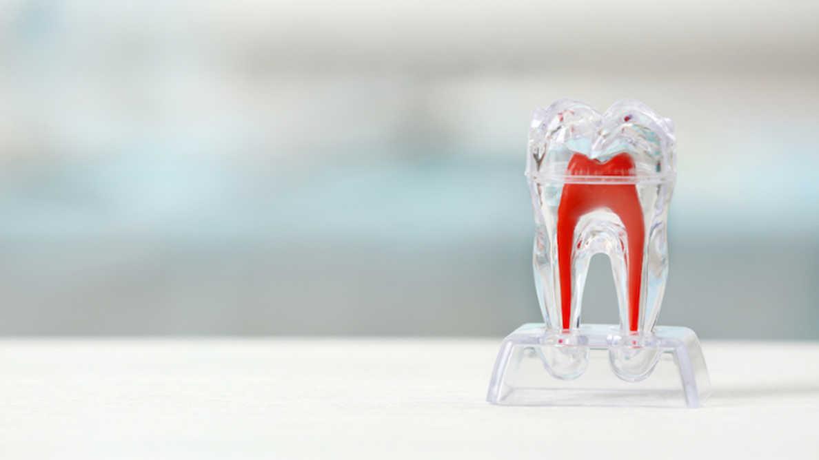 Naučnici otkrili metod za kontrolu razvoja korena zuba